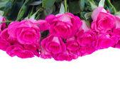 Border of fresh pink roses close up — Stock Photo