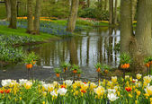 Spring garden Keukenhof, Netherlands — Stock Photo