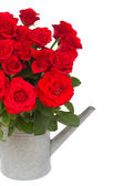 Bouquet of fresh red roses in watering can — Stock Photo