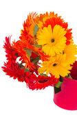 Gerbera flowers in pot close up — Stockfoto