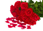 Bunch of red roses with petals — Stock Photo
