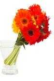 Gerbera ramo de flores em vaso — Foto Stock