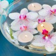 Burning candles and pink orchid flowers close up — Stock Photo