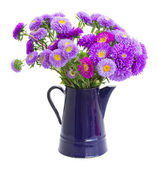 Bouquet of violet aster flowers — Stock Photo