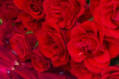 Bouquet of scarlet roses — Stock Photo
