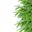 Fir tree border — Stock Photo
