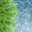 With fir tree and snow — Stock Photo