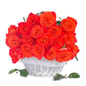 Bright orange roses in white basket — Stock Photo