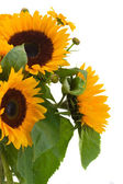 Sunflowers and calendula flowers — Stock Photo