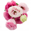 Posy of  eustoma flowers from above — Stock Photo