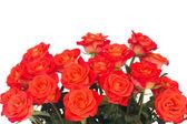 Zářivě oranžové růže poupata — Stock fotografie