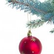 Red ball hanging on fir tree — Stock Photo