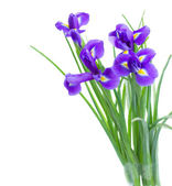 Blue irise flowers posy — Stock Photo