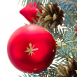 Fir tree and red christmas ball — Stock Photo