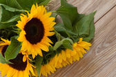 Fresh bouquet of yellow sunflowers close up — Stock Photo