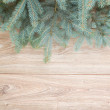 Fir tree border — Stock fotografie