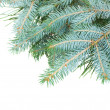 Blue fir tree — Stock Photo #33904053