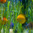 Planted tropical aquarium with fishes — Stock Photo #34155861