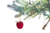 Red apple hanging on fir tree — Stockfoto