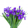 Bouquet of blue irise flowers — Stock Photo