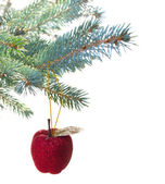 Red apple hanging on fir tree — Stock Photo