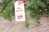 Evergreen tree with christmas tag — Stock Photo
