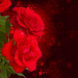 Red  roses  on dark background — Stock Photo