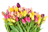 Bunch of fresh tulips flowers close up — Stok fotoğraf