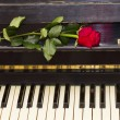 One red rose on piano — Stock Photo