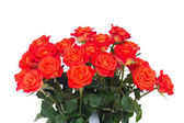 Bright orange roses buds close up — Stock Photo