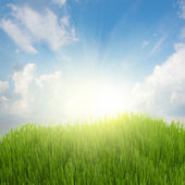 Rising sun and green grass under blue sky — Stock Photo