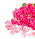 Fresh pink roses bouquet with petals close up — Stock Photo