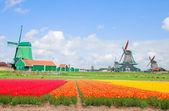 Dutch windmills over flower fields — Stock Photo