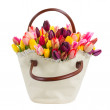 Stock Photo: Bag of tulips flowers