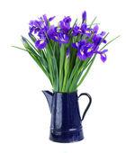 Blue irises in flower pot — Stock Photo