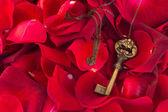 Key with crimson rose petals — Stock Photo