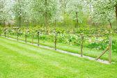 开花的苹果树木和绿草 — 图库照片
