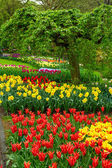 Spring flowers in holland garden — Stock Photo