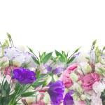 Multicolored Eustoma flowers — Stock Photo