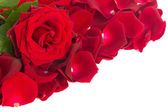 Red rose with petals border — Stockfoto