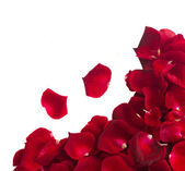 Border of rose petals — Stock Photo