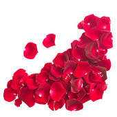 Pile of crimson rose petals — Stock Photo