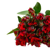Bunch of red tulips — Stock Photo