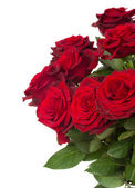 Dark red roses close up — Stockfoto