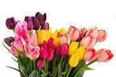 Mazzo di tulipani multicolori fiori da vicino — Foto Stock