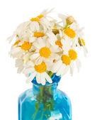 Daisy flowers posy — Stock Photo