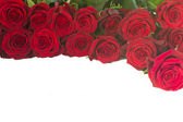 Border of fresh red roses — Stock Photo