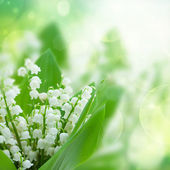 Lilly of the valley flowers close up — Stock Photo