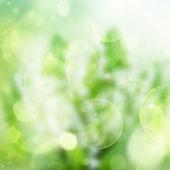 Green festive bokeh background — Stock Photo