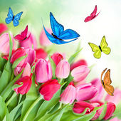 Pack of pink tulips with butterflies — Stock Photo